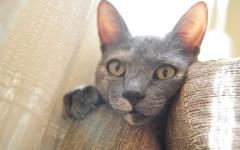 Gatti e divani: come evitare la loro distruzione?
