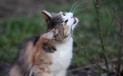 Gato come cosas raras: una costumbre a evitar