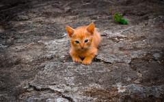 Gattino gettato da auto in corsa: salvato grazie ai bambini
