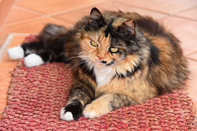 Cats lose their hair: why do cats lose their hair?