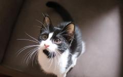 Educare un gattino: ecco come fare a educarlo fin da piccolo