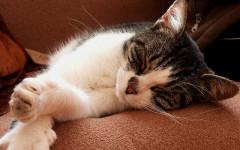 Diabete nel gatto: come prendersi cura dei felini