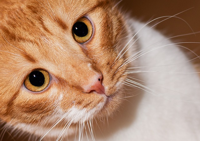Cat's whiskers: interesting things you did not know