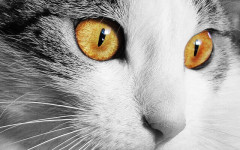 Conjunctivitis in cats: causes, symptoms and treatment