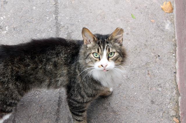 Adoptar un gato callejero: adoptar es un acto de amor