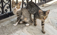 Expert tips for adopting a cat: What new parents should know
