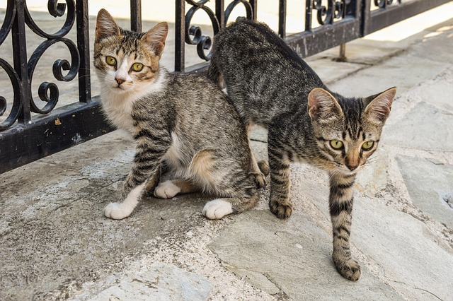 Myths about cat adoption: let's take a look at some of them