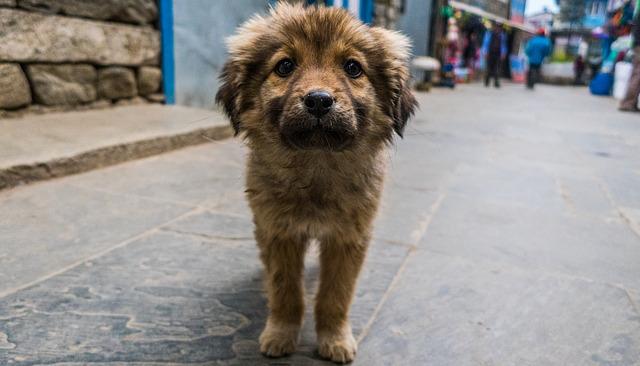 Carne di cane vietata ad Hanoi: prima città del Vietnam