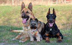 Taglia del cane e giusta alimentazione: come deve essere