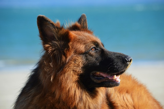 Things you did Not Know About your Dog