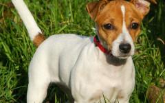 Calcoli renali nel cane: cosa sono e come curarli