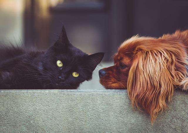 Cani e gatti dei fumatori vivono meno: la ricerca allarmante