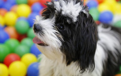 Which emotions do dogs feel?