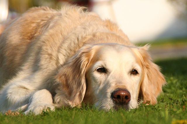 Cane trova cavallo in fin di vita e da l'allarme: gesto d'amore
