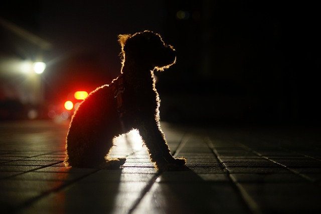 Dog won't sleep at night: here the reasons why