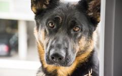 Insegnare nome al cane: tutti i segreti per farlo