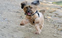 Mi perro salta al saludar: ¿qué puedo hacer?