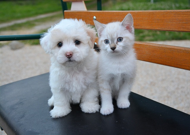 Arrivo di un cucciolo nuovo in casa! Siete preparati?