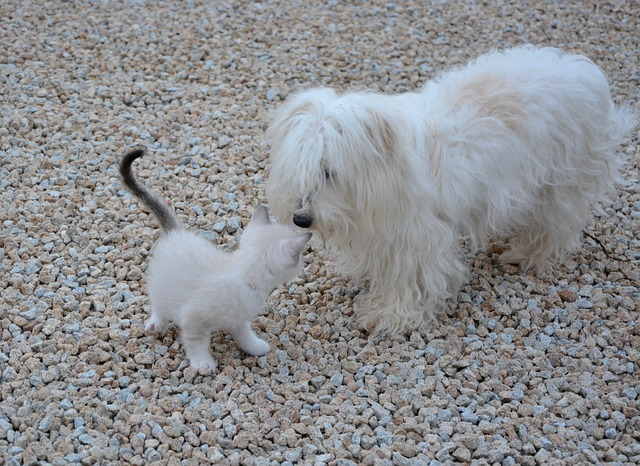 Why do dogs hate cats so much?