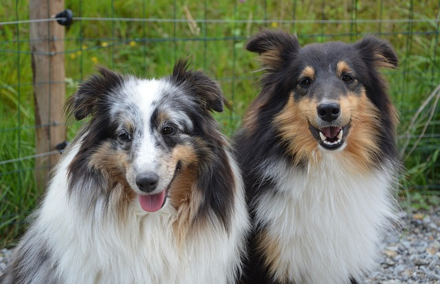 Faithful dogs: which are the most faithful dogs?