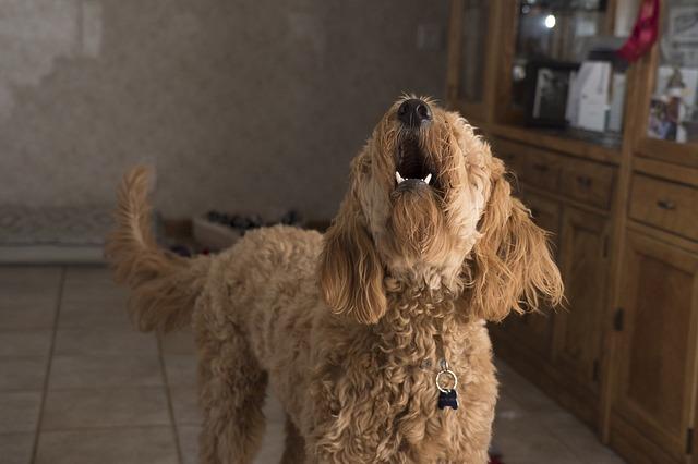Perro ladra cuando llaman al timbre: ¿qué puedo hacer?