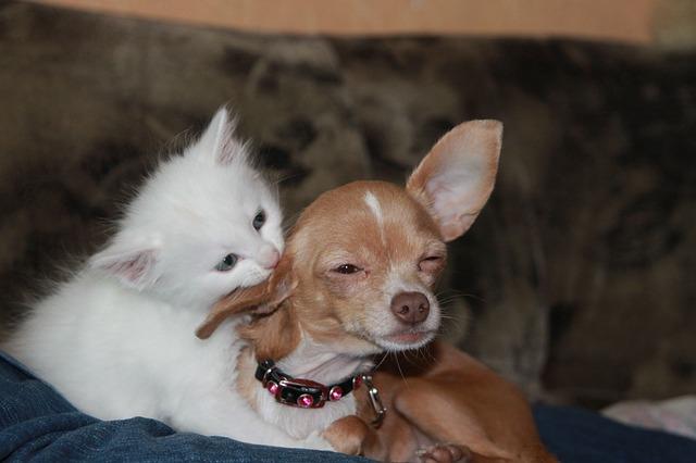 Dare medicine cani e gatti: come farlo senza stress