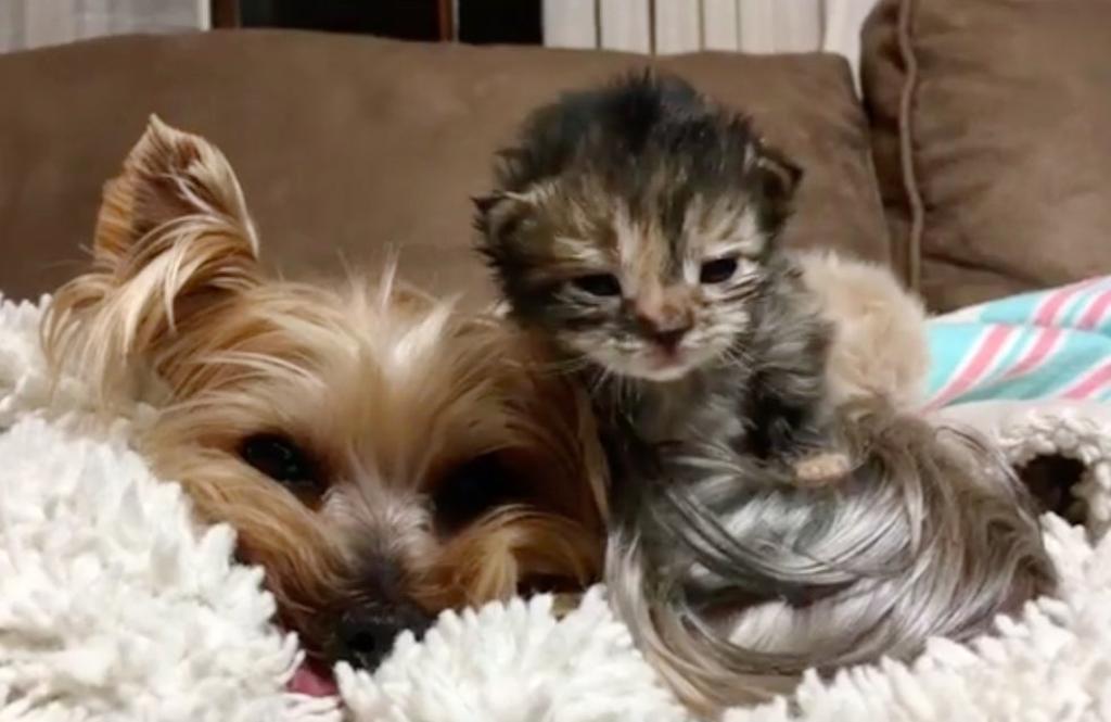 Gatti abbandonati curati da cane: lieto fine per loro