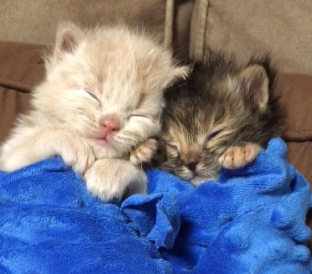 Gatti abbandonati curati da un cane: lieto fine per loro
