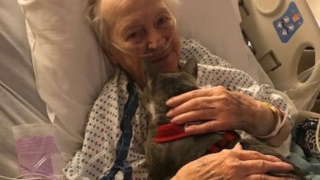 Gatto cieco conforta donna malata: la storia di Donny