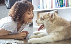Dogs know when you smile? A scientific study