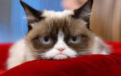 Grumpy cat: la storia e la fama del gatto più famoso del mondo