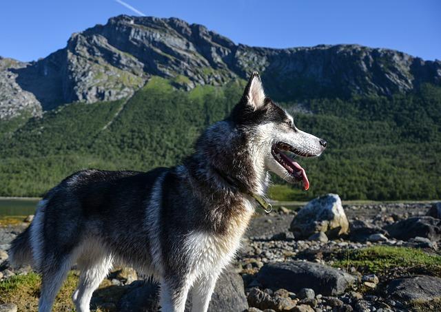 Come viaggiare con il cane: istruzioni per portare il pet in vacanza