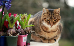 Cats knock things over: do they do it for fun?