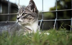 Adoptar un gato: mitos y realidades, lo que se debe saber