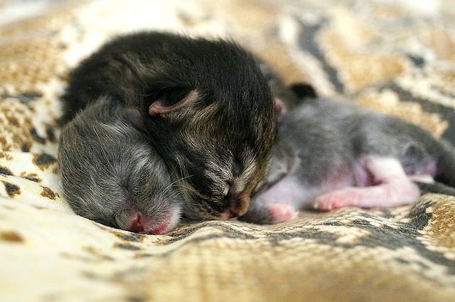Gattino appena nato: ecco alcuni consigli su latte e cure