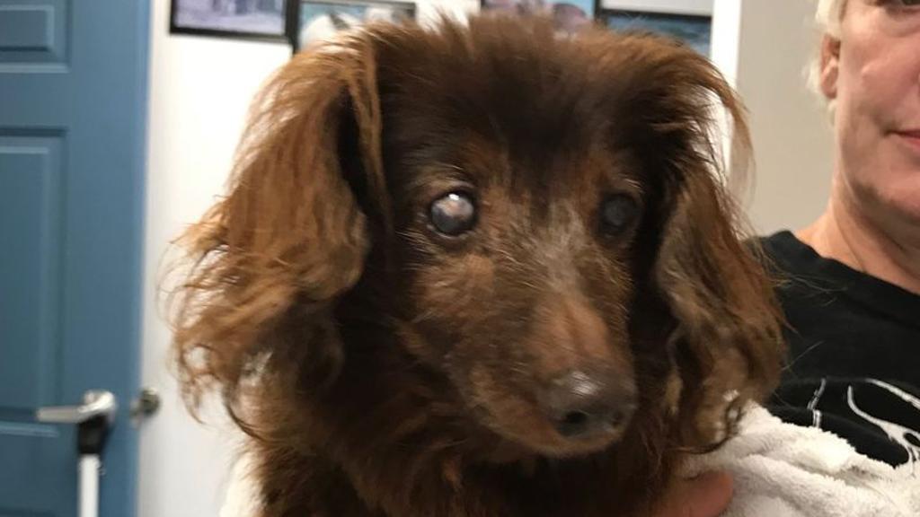 Cane scomparso torna a casa dopo 5 anni