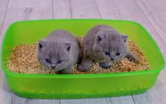 Lettiera per gatti chiusa o aperta? Quale scegliere?