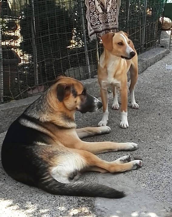 Lupo cerca casa, aiutiamolo! Appello per adozione