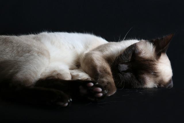 Sonnolenza del gatto: quali sono le cause e i sintomi?