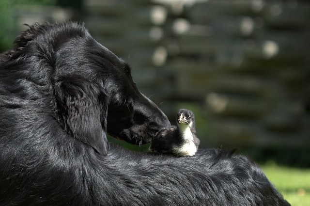 Dogs adopt other animals: why would they do that?