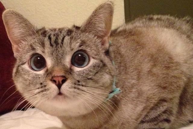 Nala cat: da gattina abbandonata a star