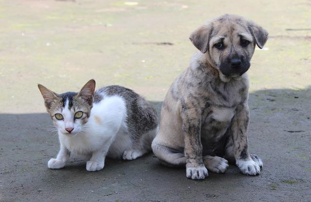 Consumo di carne di cane e gatto: stop anche in Italia