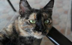 Gato está enfermo: consejos para cuidar a tu mascota