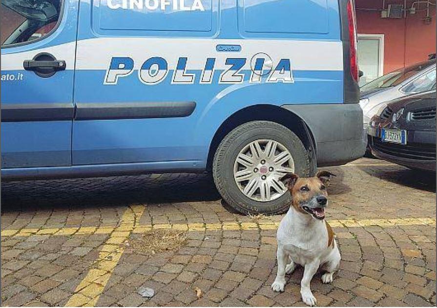 Cane antidroga Pocho minacciato per il suo fiuto eccezionale