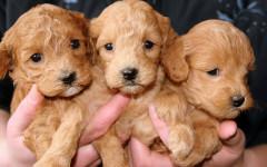 Socialización del cachorro: etapa esencial para el perro