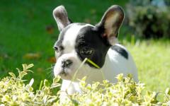 ¿Qué emociones sienten los perros? Datos caninos