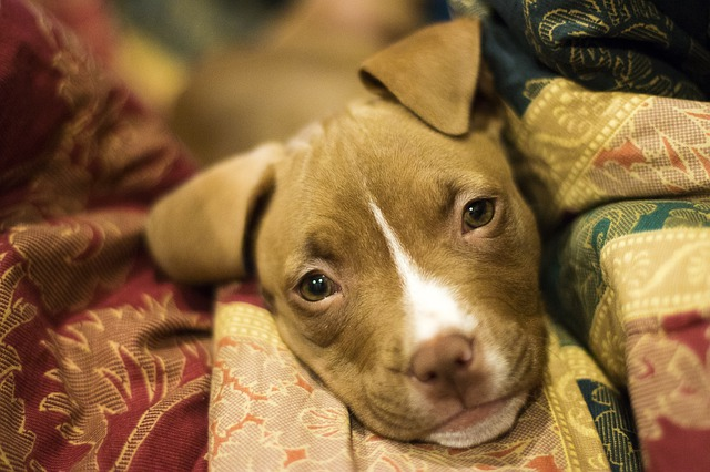 Why are dogs so faithful? A look at dog loyalty