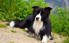 Quietest dog breeds: the top 10 quietest dog breeds