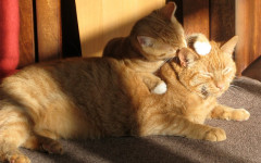 Cat loves you: these are the signs your cat loves you