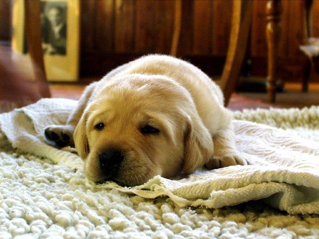 Cane solo in casa: quante ore può restare solo?